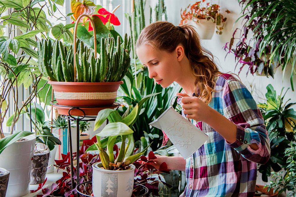 Комнатные цветы от компании Украфлора