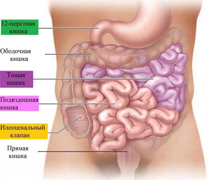резекція тонкого кишечника