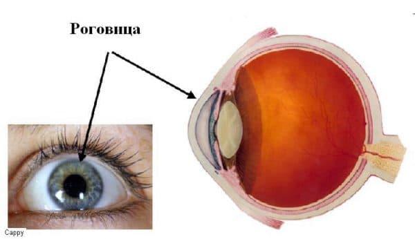 рогівкового шару очі