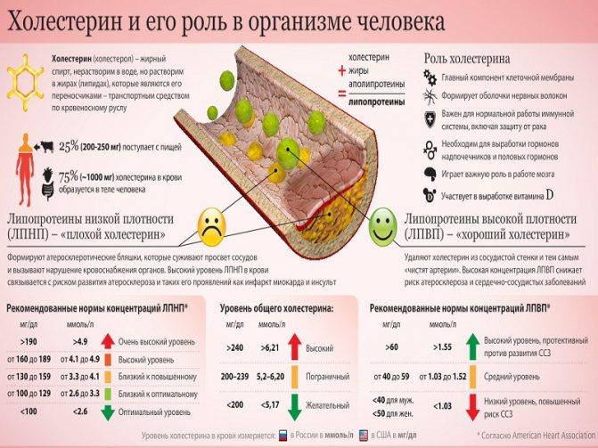 Роль холестерину в організмі