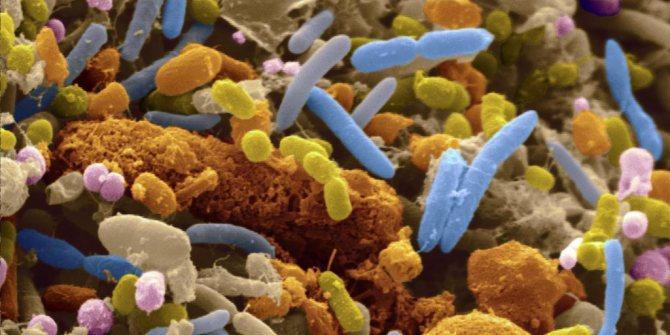 зростання бактерій