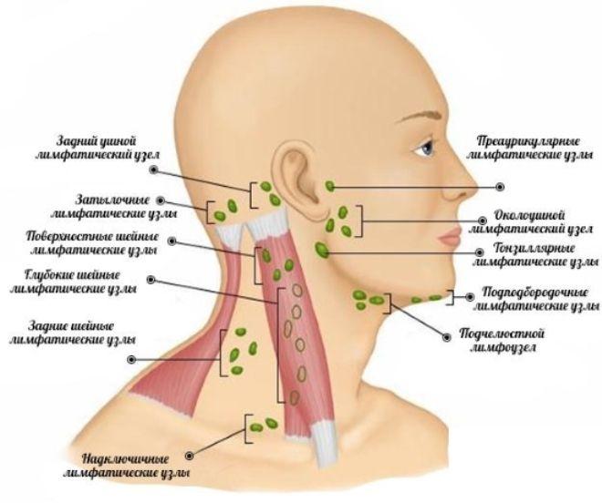 шийні лімфатичні вузли розташування