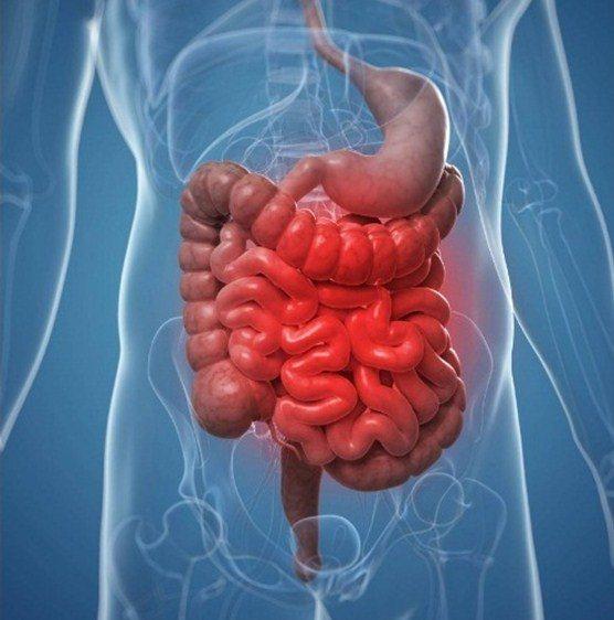 Схема кишечника людини