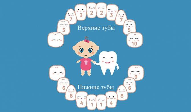 Схема прорізування дитячих зубів