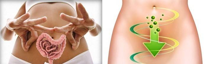 Схематичне зображення кишечника людини