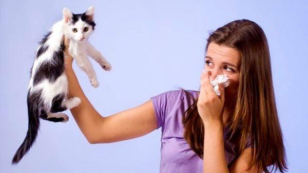 Шерсть тварин може викликати алергію