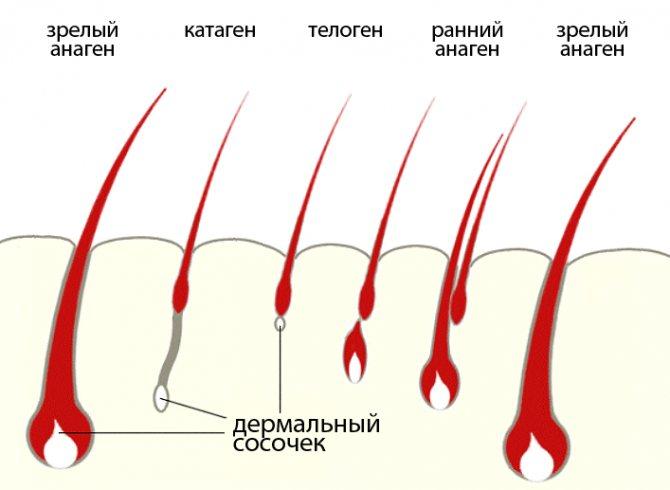 Сильно віпадає волосся у жінок.  Причини и лікування народними засоби, препаратами, вітаміннімі комплексами