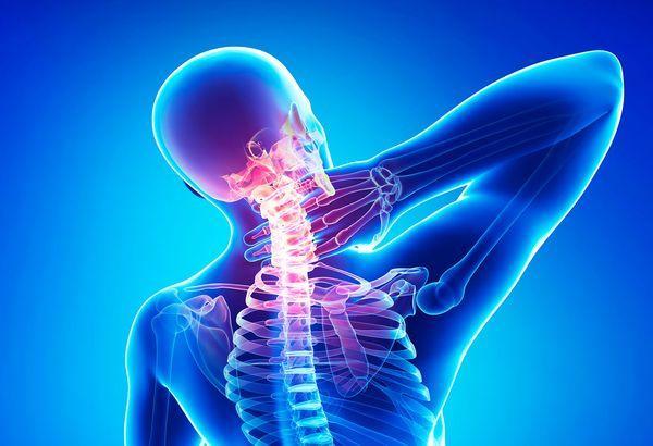 Скелет людини