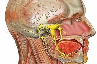слуховий нерв