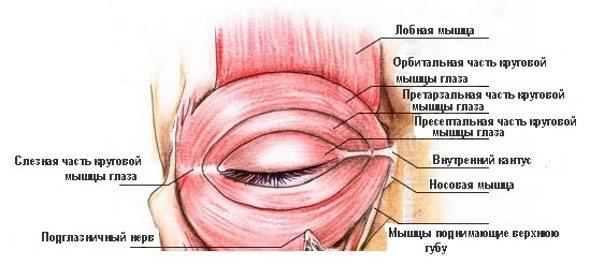 Спазм очніх ямок и лобове часток