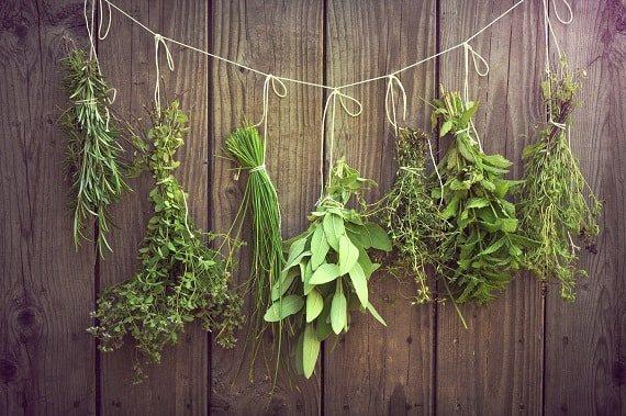 Способи сушки лікарських коренів рослин