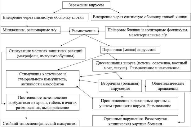 стадії патогенезу