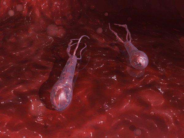 Правцева паличка (Clostridium tetani)