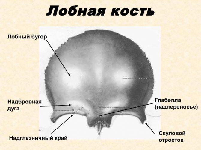 Будова черепа людини. Фото з описом, анатомія. Вигляд ззаду, спереду, зверху, збоку, в розрізі