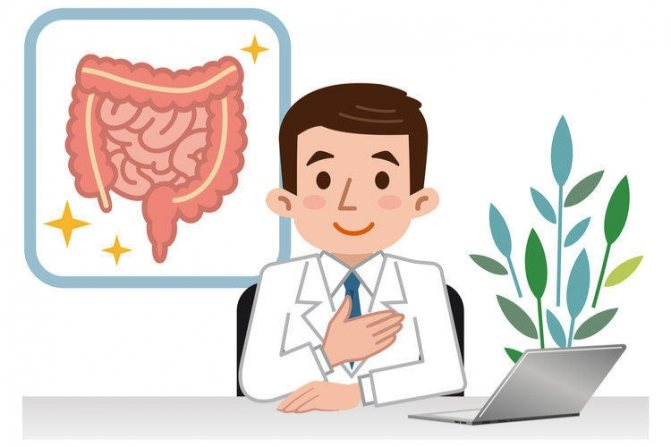 Будова кишечника людини фото з описом
