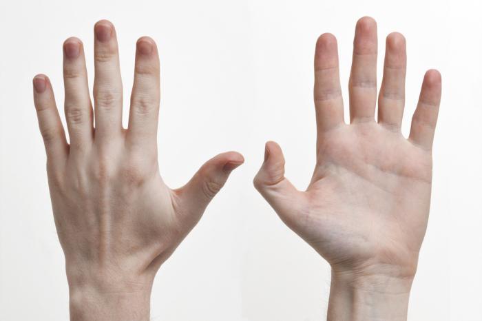 будову кісті руки сухожілля