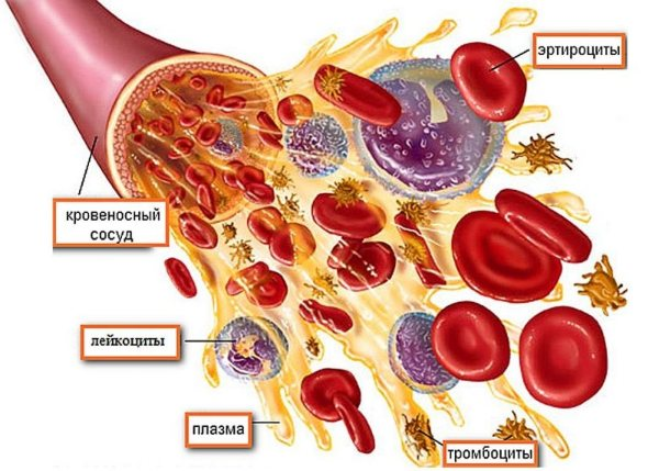 Згортання крові таблиця норм за віком у жінок, чоловіків та дітей