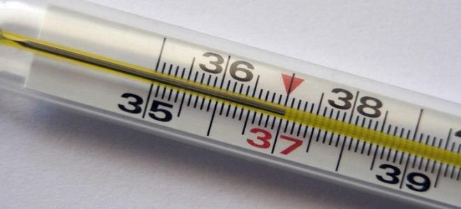температура тела 37