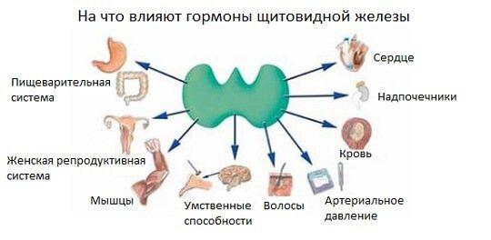 Тиреотропного гормону: Що це таке і за що відповідає