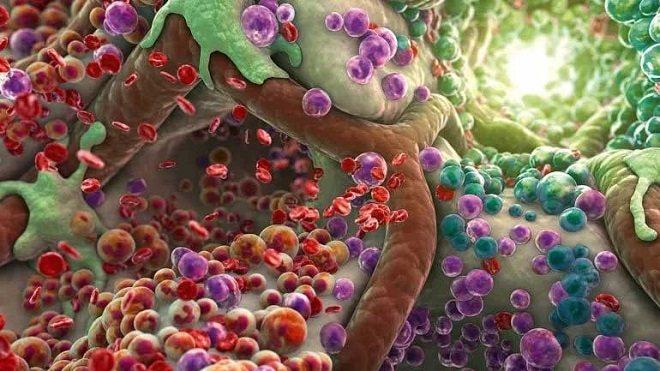 токсини в організмі