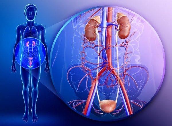 Трава Пол впала. Лікувальні властивості, застосування в народній медицині від каменів в нирках і жовчному міхурі, інших хвороб. Протипоказання