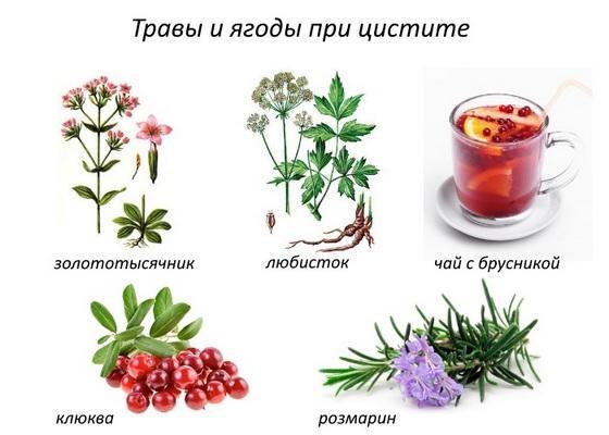 Трави и ягоди при цістіті
