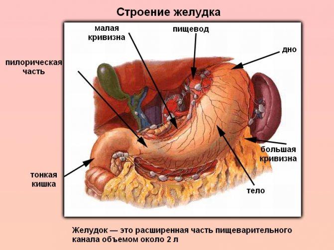 тяжкість у верхній частині шлунка