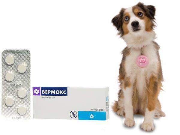 Вермокс для собак - інструкція із застосування