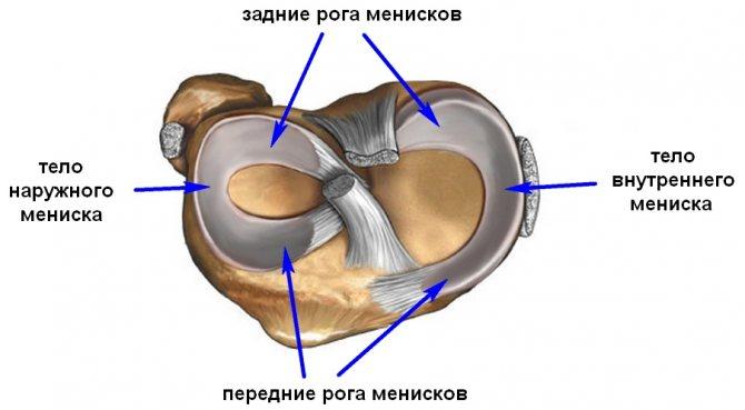 ВНУТРІШНІЙ Меніск колінного суглоба-3