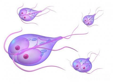 Збудниками лямбліозу у дітей є лямблії - паразити, що відносяться до класу найпростіших