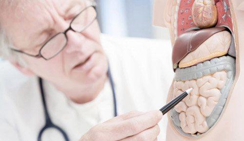 лікар з макетом шлунково кишкового тракту