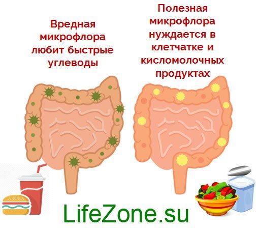 шкідлива і корисна мікрофлора кишечника