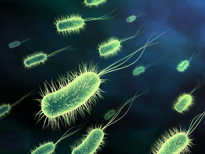 шкідливі бактерії