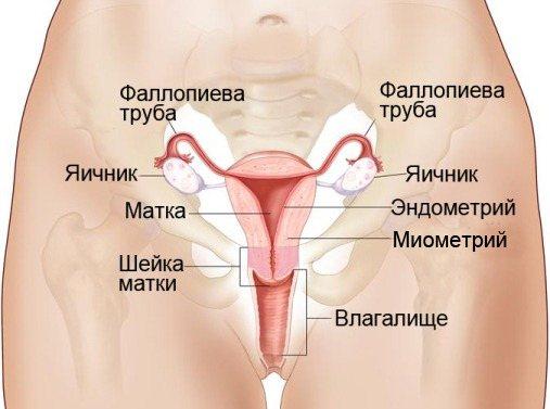 Яєчнікі у жінок