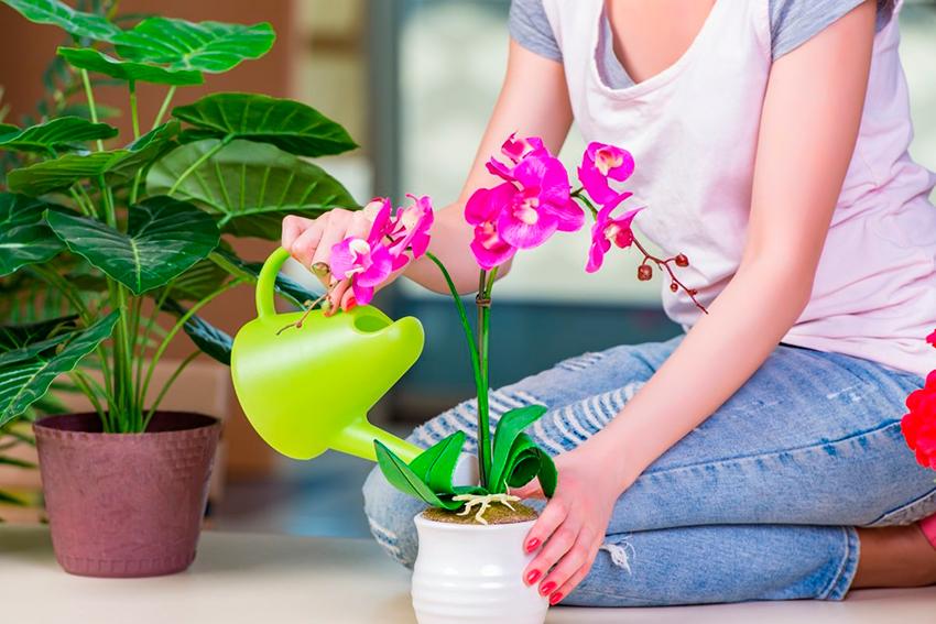 Уход за орхидей (комнатные растения)