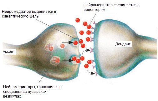 захоплення ацетилхоліну