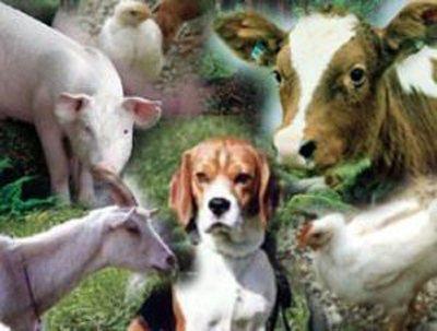 тварини, Які хворіють и пошірюють Brucella