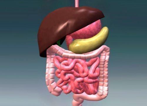 шлунково-кишково тракту людини