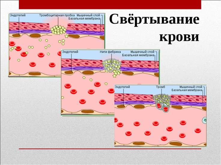 Значення гемостазу для організму