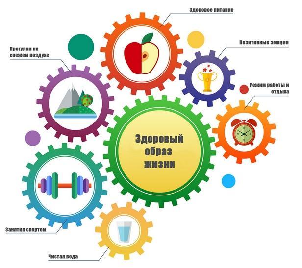ЗСЖ інфографіка